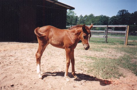 Future Champion/Dazzel, Foaled May 30, 1998