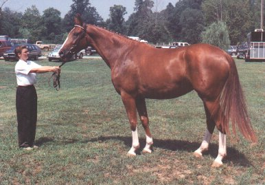 Champion Mare Glimmer/To High Adventure Horse Page