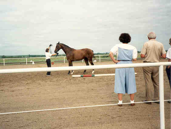 Champion Mare Graefin/To High Adventure Horses/http://www.highadventure1.com/horse.htm